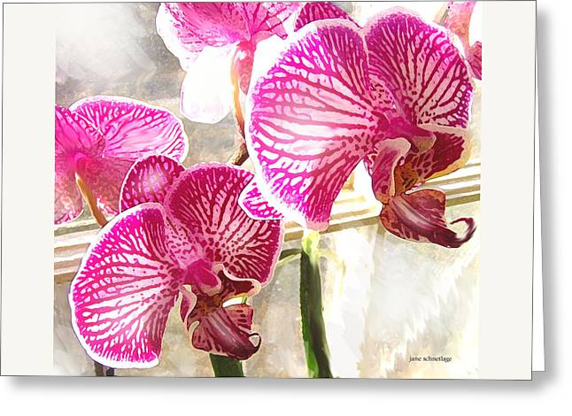 Magenta Orchids Greeting Card by Jane Schnetlage