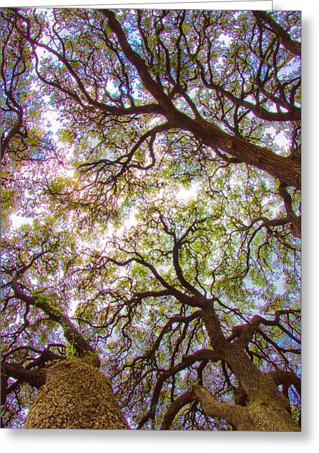 Magic Canopy Greeting Card