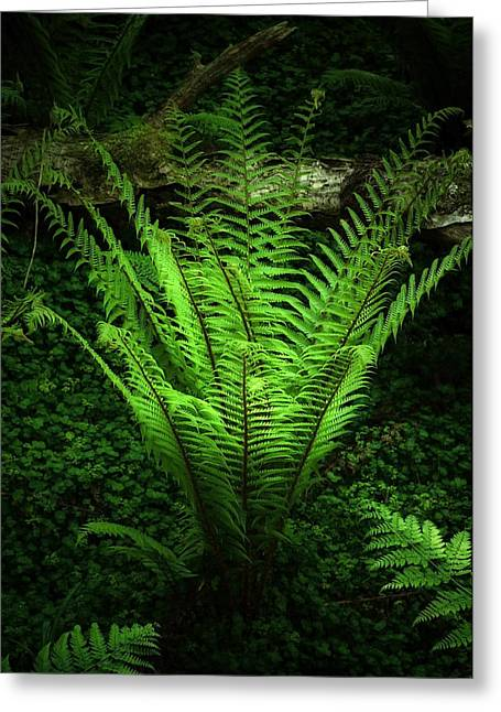 Best Sellers -  - Ghostly Greeting Cards - Magic Fern Greeting Card by Svetlana Sewell