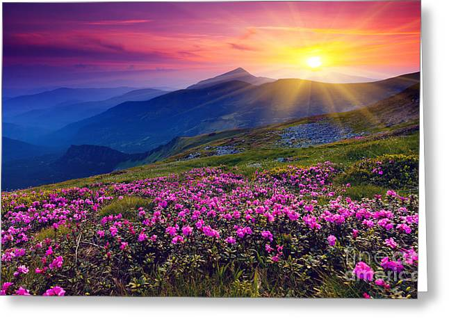 Magic Pink Rhododendron Flowers On Summer Mountain Greeting Card by Caio Caldas