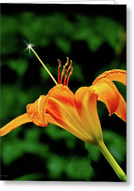 Magic Wand - Lily Greeting Card by Michael Taggart II