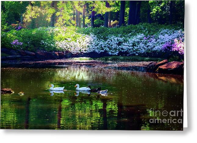 Magical Beauty At The Azalea Pond Greeting Card