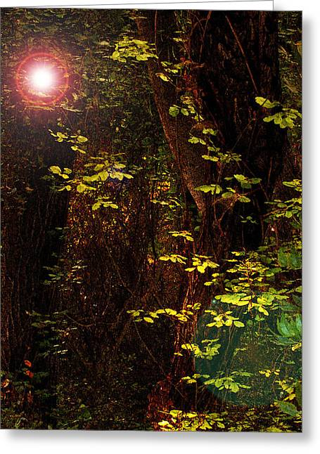 Magical Dark Woods Greeting Card by Jean Booth