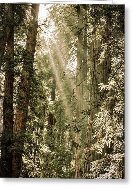 Magical Forest 2 Greeting Card