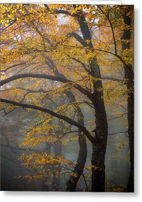 Magical Forest Blue Ridge Parkway Greeting Card