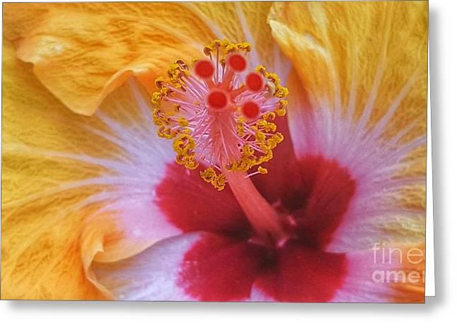 Magical Hibiscus  Greeting Card