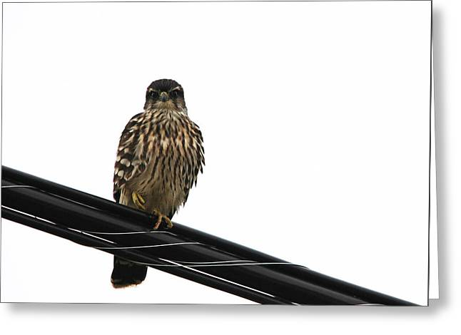 Magical Merlin Greeting Card by Debbie Oppermann