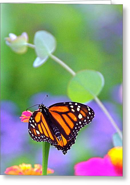 Greeting Card featuring the photograph Magical Monarch by Byron Varvarigos