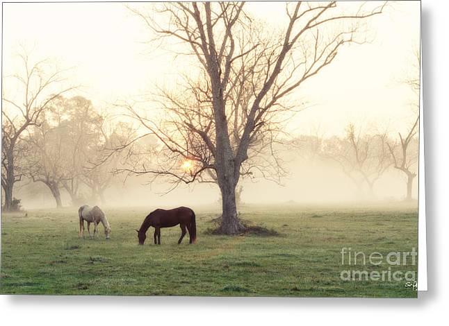 Magical Morning Greeting Card by Scott Pellegrin