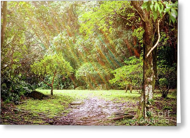 Greeting Card featuring the photograph Magical Tulgey Wood by Cindy Garber Iverson