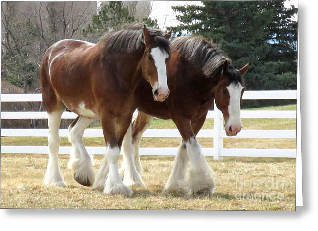 Magnificant Horses - The Clydesdales -9 Greeting Card by Diane M Dittus
