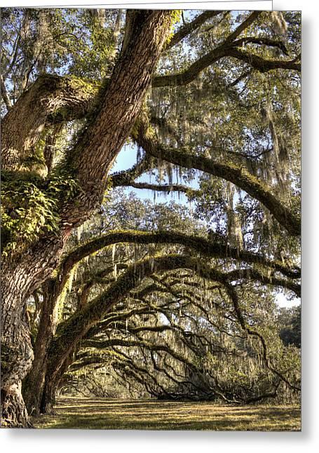 Magnificant Live Oak Trees Color Greeting Card
