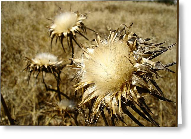 Magnificence - Departing Milk Thistles Greeting Card