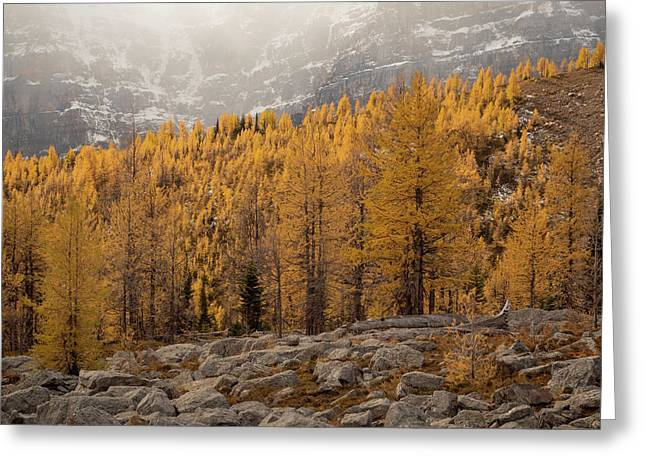 Magnificent Fall Greeting Card