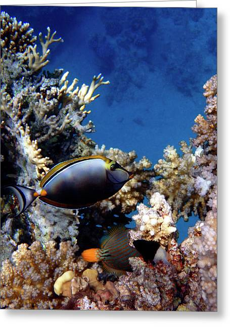 Magnificent Red Sea World Greeting Card