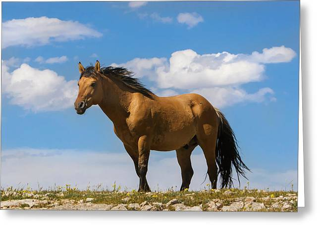 Magnificent Wild Horse Greeting Card