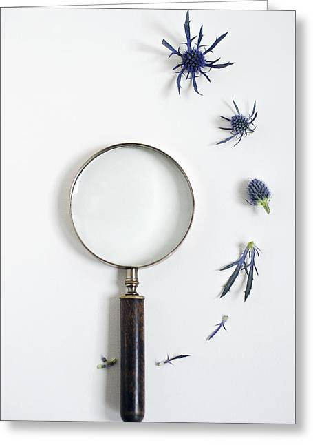 Magnifying Glass And Blue Thistle Greeting Card
