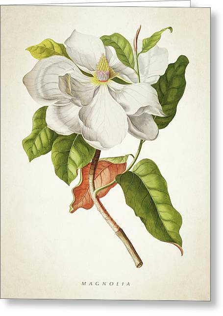 Magnolia Botanical Print Greeting Card