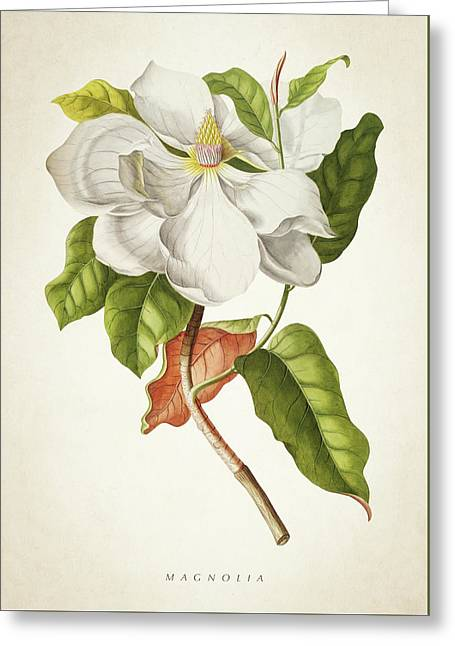 Magnolia Botanical Print Greeting Card by Aged Pixel