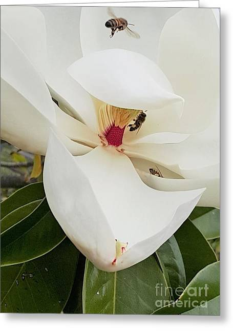 Magnolia Fans Greeting Card by Jasna Gopic
