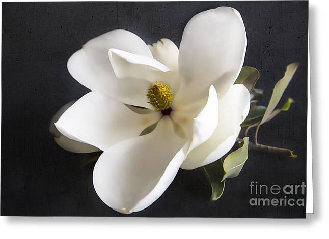 Magnolia Flower Greeting Card by Elena Nosyreva