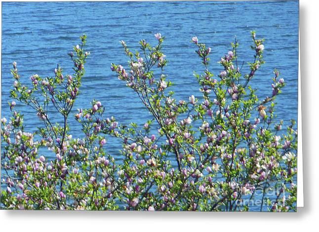 Magnolia Flowering Tree Blue Water Greeting Card