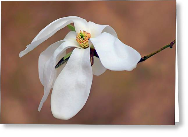 Greeting Card featuring the photograph Magnolia Grace by Nikolyn McDonald
