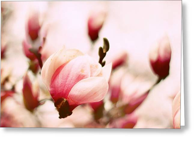 Magnolia In Bloom Greeting Card by Jessica Jenney