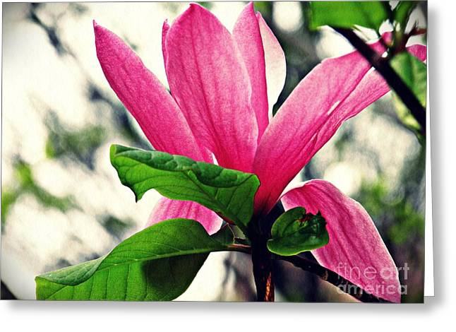 Magnolia In Pink  Greeting Card by Sarah Loft