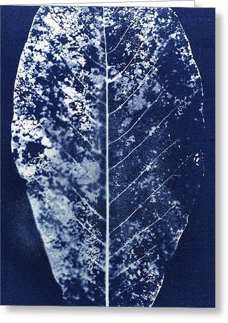 Magnolia Leaf Skeleton Greeting Card by Elspeth Ross
