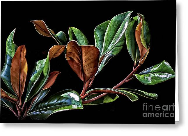 Magnolia Leaves Greeting Card