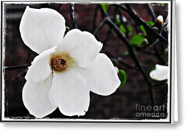 Magnolia Memories 1 Greeting Card by Sarah Loft