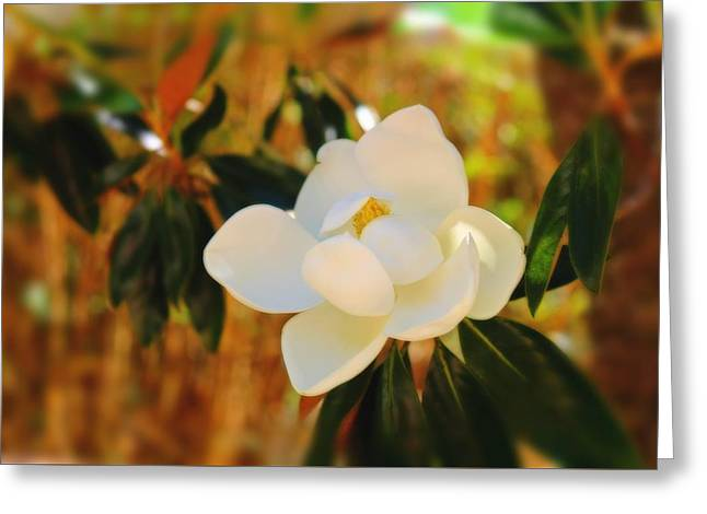 Magnolia Greeting Card by Mindy Newman