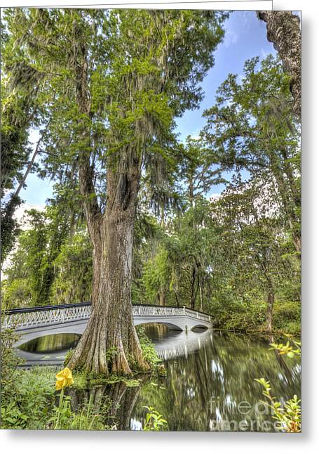 Magnolia Plantation Cypress Tree Greeting Card by Dustin K Ryan