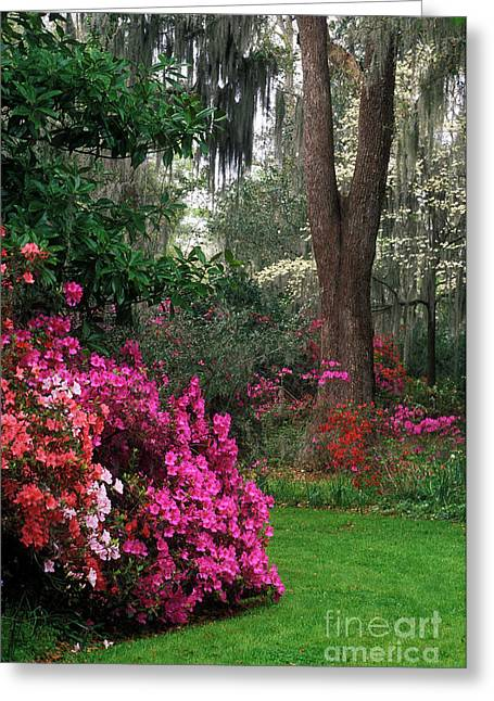 Greeting Card featuring the photograph Magnolia Plantation - Fs000148a by Daniel Dempster
