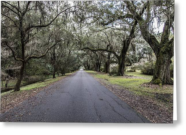 Magnolia Plantation Road Greeting Card by John McGraw