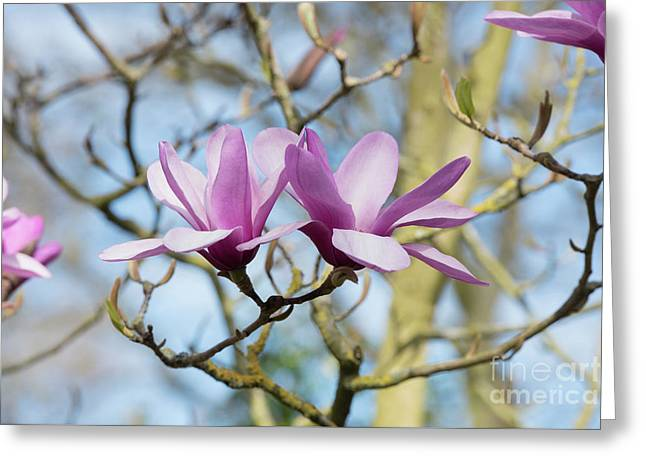 Magnolia Serene Flowers Greeting Card by Tim Gainey