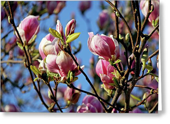 Greeting Card featuring the photograph Magnolia by Sergey and Svetlana Nassyrov