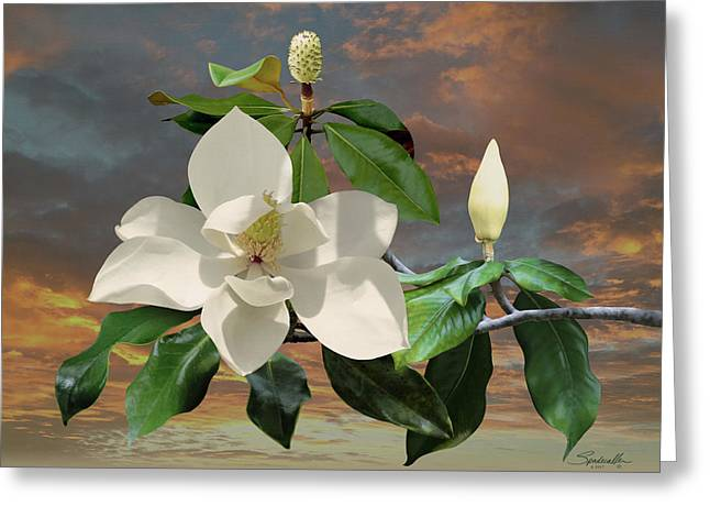 Magnolia Sunset Greeting Card by Spadecaller