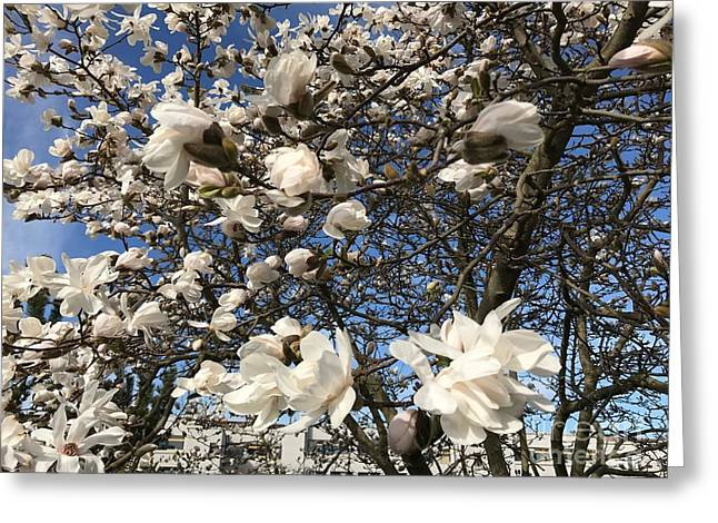 Greeting Card featuring the photograph Magnolia Tree In Blossom by Patricia Hofmeester