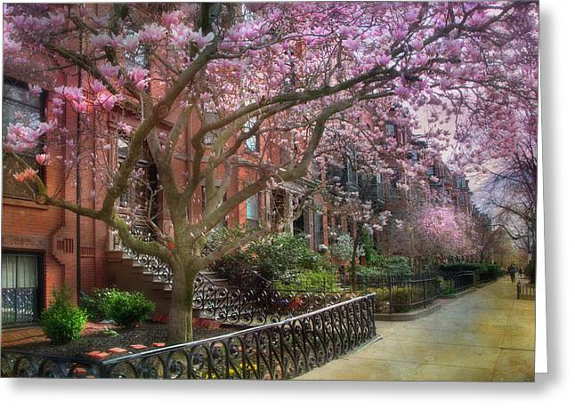 Magnolia Trees In Spring - Back Bay Boston Greeting Card