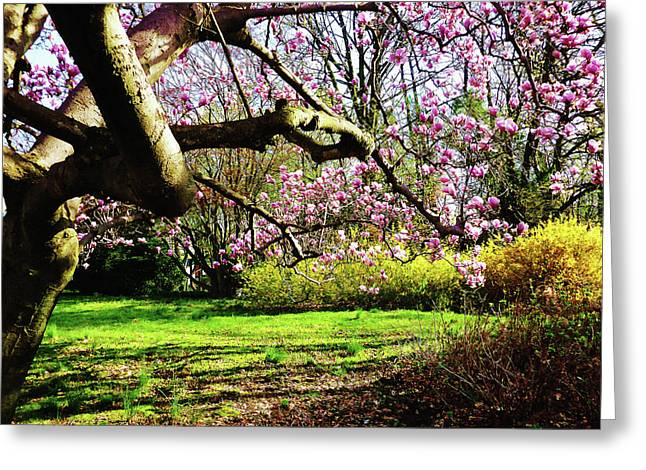 Magnolias And Forsythias Greeting Card by Susan Savad