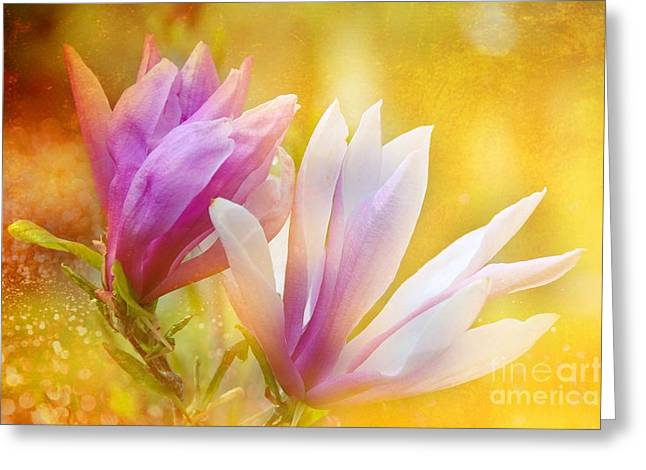 Magnolias Greeting Card by Elaine Manley