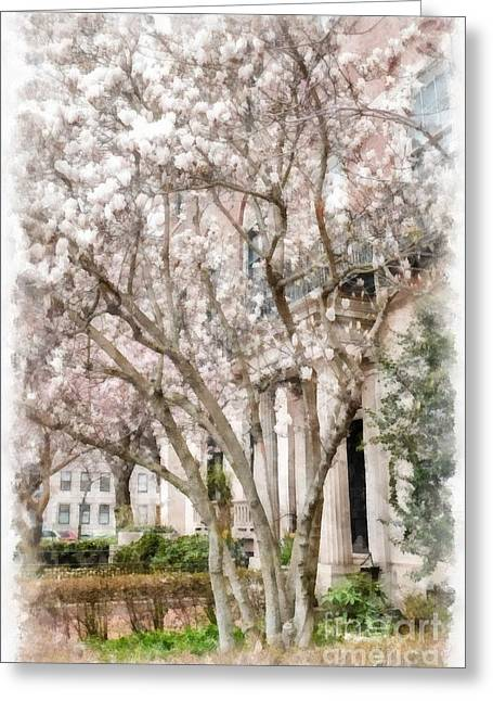 Magnolias In Back Bay Greeting Card by Edward Fielding