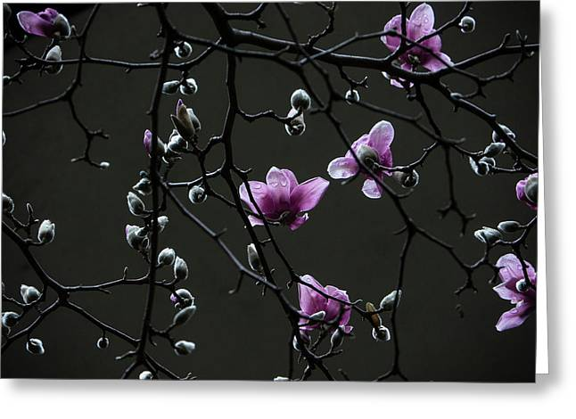 Magnolias In Rain Greeting Card
