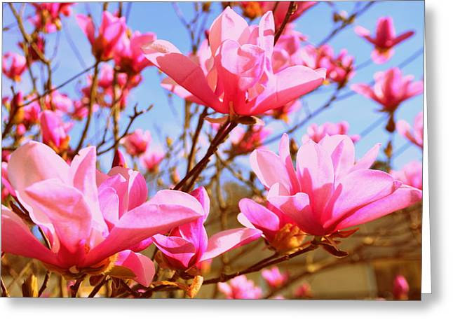 Magnolias In The Sky Greeting Card