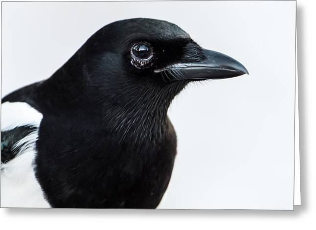 Magpie Portrait Greeting Card by Torbjorn Swenelius