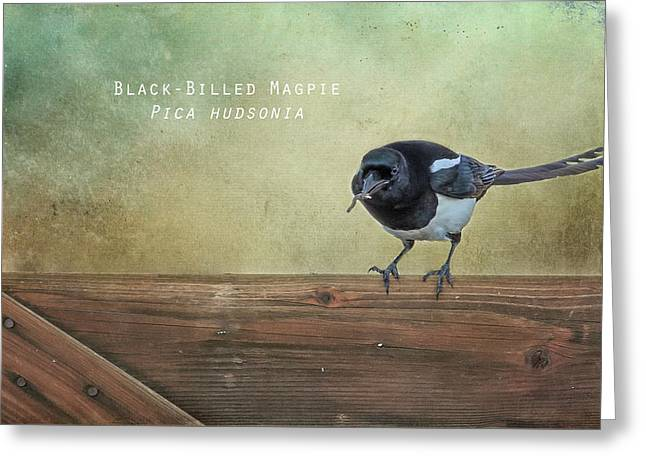 Magpie With A Worm Greeting Card