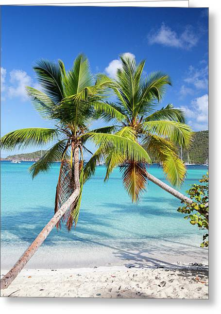 Greeting Card featuring the photograph Maho Bay Palms by Adam Romanowicz