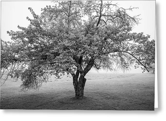 Greeting Card featuring the photograph Maine Apple Tree In Fog by Ranjay Mitra